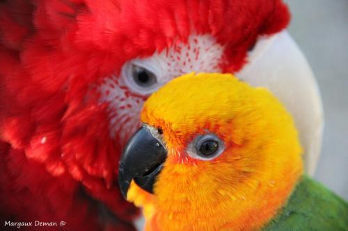 relation perroquet
